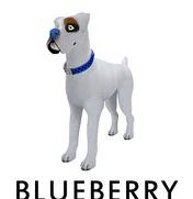 blueberry nose
