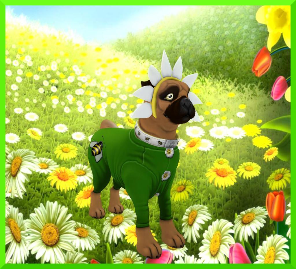 DaisyDoggie