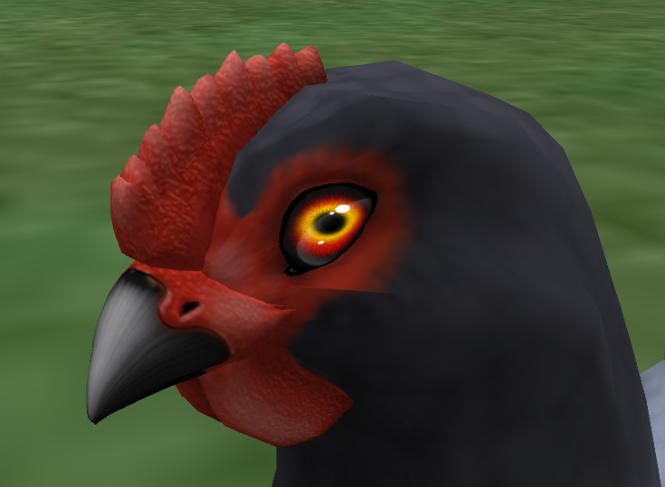 Red Fury Eyes on a Blue Andalusian Hen