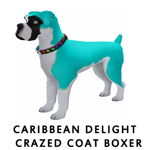 Caribbean_Delight_Coat_Boxer