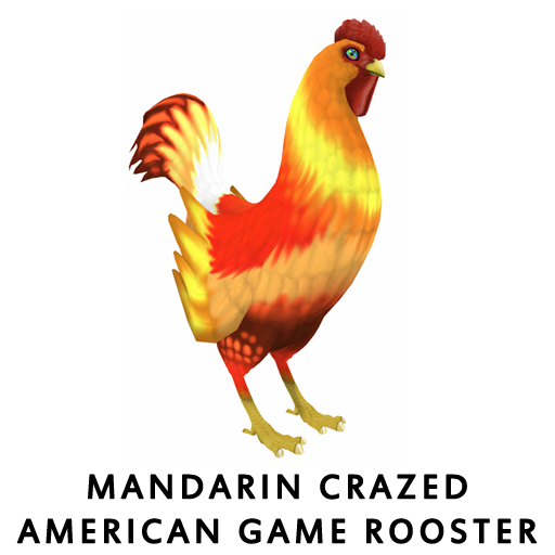 MandarinCrazed_American_Game_Hen