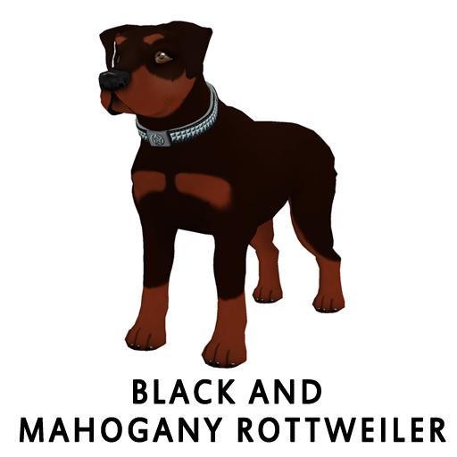BlackandMahoganyRottweiler