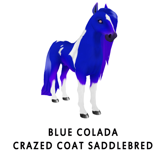 Blue_ColadaCrazed_Coat_Saddlebred