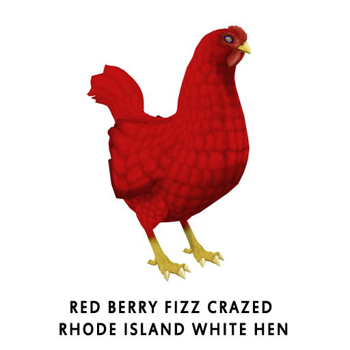 Red_Berry_FizzRhode_Island_WhiteHen