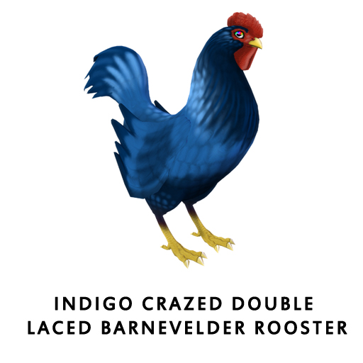 IndigoCrazed_Double_Laced_BarnevelderRooster