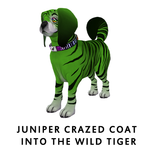 Juniper_Crazed_Coat_Into_The_Wild_Tiger