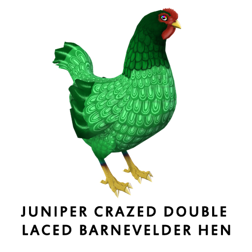 Juniper_Crazed_Double_Laced_BarnevelderHen