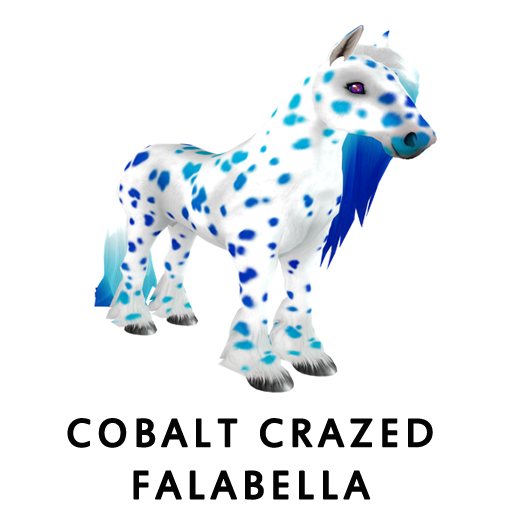Cobalt_Crazed_Falabella