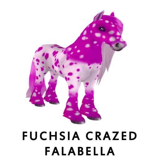 FuchsiaCrazed_Falabella