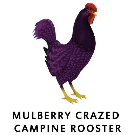 MulberryCrazed_CampineRooster