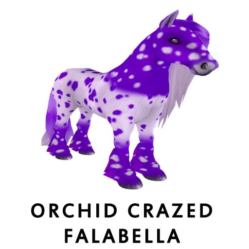 OrchidCrazed_Falabella