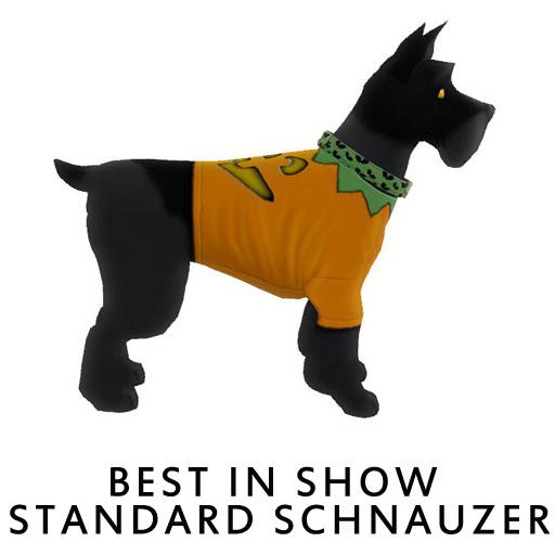 Best_in_Show_Standard_Schnauzer2