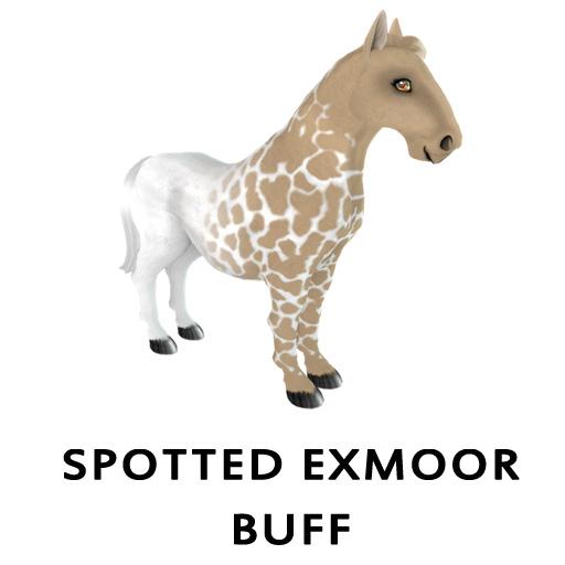 Spotted Exmoor Buff