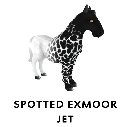 Spotted ExmoorJet