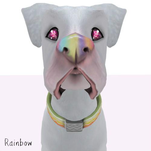 Rainbow Nose