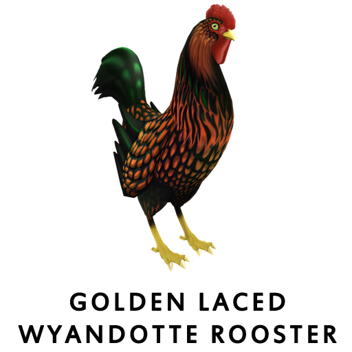 Golden Laced WyandotteRooster