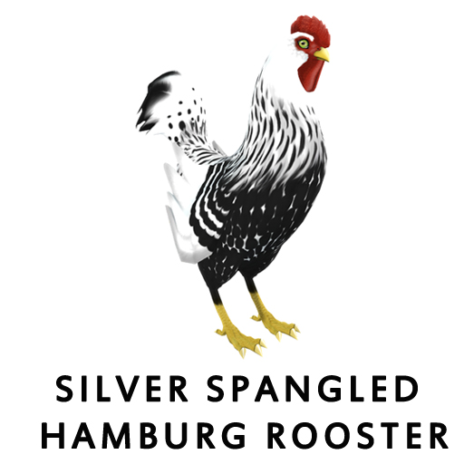 Silver Spangled HamburgRooster