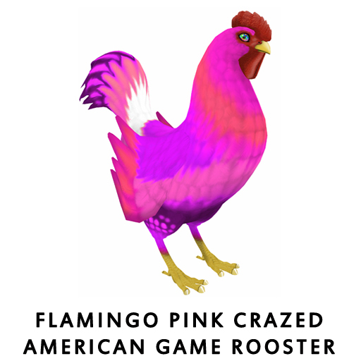 Flamingo_Pink_Crazed_American_Game_Rooster