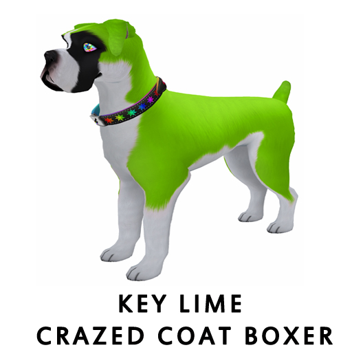 Key_Lime_Crazed_Coat_Boxer