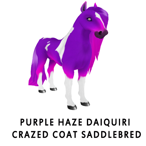 Purple_Haze_Daiquiri_Crazed_Coat_Saddlebred