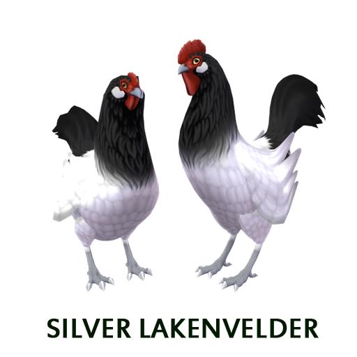 Silver Lakenvelder
