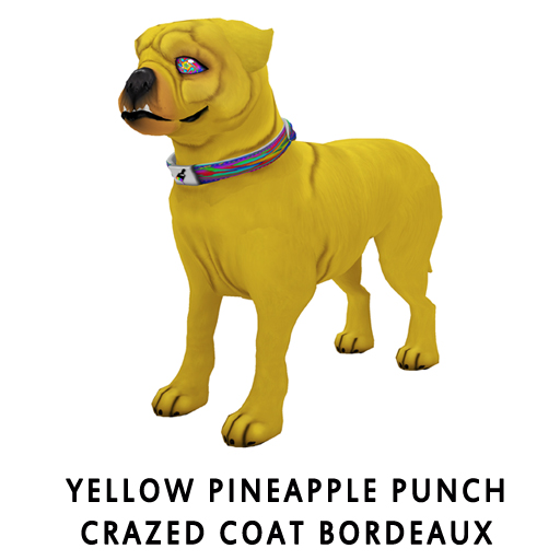 Yellow_Pineapple_Punch_Crazed_Coat_Bordeaux