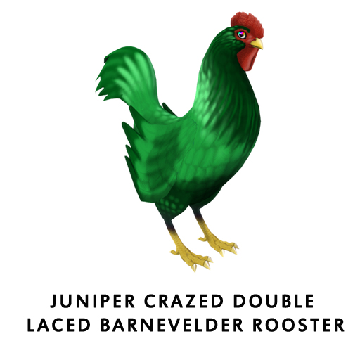Juniper_Crazed_Double_Laced_BarnevelderRooster
