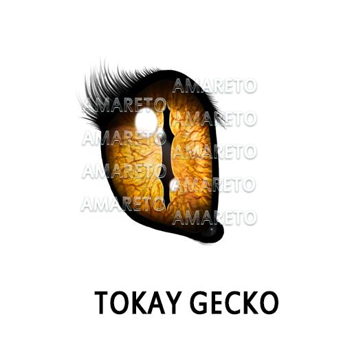 tokay-gecko